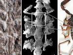 perbandingan-fosil-kalajengking-berusia-430-juta-tahun.jpg