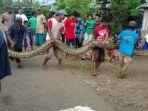 pertarungan-warga-dengan-ular-piton.jpg