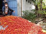 petani-buang-tomat-di-bener-meriah_harga-tomat-anjlok.jpg