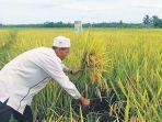 petani-di-kawasan-kecamatan-kuta-makmur-aceh-utara.jpg