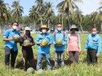 petani-semangka-binaan-mifa-panen-perdana-3-ton-semangka.jpg