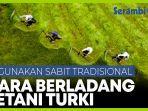 petani-turki-pertahankan-sabit-tradisional-untuk-berladang.jpg