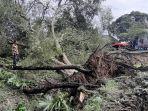 pohon-asam-jawa-dan-pohon-lainnya-tumbang-di-lokasi-tanah-bergerak.jpg