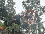 pria-68-tahun-meninggal-saat-panjat-pohon-setinggi-30-meter.jpg