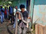 pria-di-batanghari-nekat-gigi-ekor-ular-piton-4-meter.jpg
