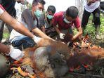 proses-evakuasi-orangutan-yang-terjebak-di-perkebunan-sawit-desa-paya-bumbum.jpg