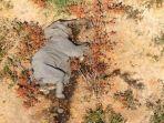 ratusan-gajah-mati-secara-misterius-di-botswana-afrika.jpg