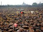 ritus-gadhimai-sebuah-pembantaian-hewan-terbesar-di-dunia.jpg
