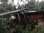 rumah-warga-yang-tertimpa-pohon-akibat-puting-beliung-di-desa-paya-meudru-paya-bakong.jpg