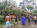 rumah-zahri-yang-rusak-berat-akibat-ditimpa-pohon-di-desa-keumuneng-hulu-kecamatan-birem-bayeun.jpg