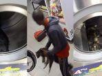 sadis-pria-ini-terekam-masukkan-3-kucing-dan-diputar-hidup-hidup-di-dalam-mesin-cuci-laundry.jpg