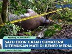 satu-ekor-gajah-sumatera-ditemukan-mati-di-bener-meriah.jpg