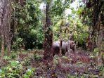 seekor-gajah-liar_20171206_122233.jpg
