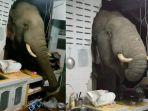 seekor-gajah-yang-kelaparan-di-tengah-malam-mendobrak-dinding-dapur-rumah-warga.jpg