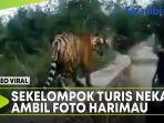 sekelompok-turis-nekat-ambil-foto-harimau-dari-dekat.jpg