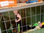 seorang-anak-ditemukan-di-dalam-kandang-yang-dikelilingi-oleh-700-binatang.jpg