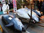 seorang-pendeta-shinto-mendoakan-ikan-tuna-seberat-405-kilogram_20180105_214955.jpg