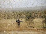 serangan-belalang-di-india1.jpg