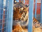 singa-suriah_20170730_210925.jpg