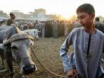 suasana-pasar-hewan-kurban-di-mesir_20170901_190300.jpg