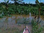 tanam-jagung-di-bekas-permukiman-penduduk-aceh-singkil-yang-terendam-banjir.jpg