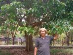 tarmizi-pemilik-pohon-jengkol-terbaik-di-indonesia.jpg
