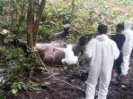 tim-dokter-hewan-dari-bksda-aceh-melakukan-otopsi-terhadap-gajah-betina.jpg
