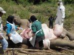 tim-dokter-hewan-dari-pusat-konservasi-gajah_20180815_091257.jpg