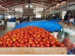 tomat-t898i.jpg