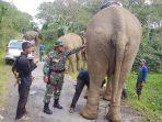 translokasi-gajah.jpg