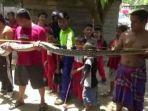 ular-phyton-sepanjang-emlat-meter-lebih-masuki-kawasan-perumahan-mewah.jpg