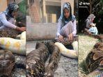 video-viral-anak-perempuan-ini-main-sama-empat-ekor-ular-piton-gak-ada-takut-takutnya.jpg