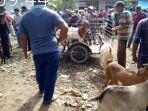 warga-membeli-hewan-kurban-di-pasar-hewan-beureunuen-pidie.jpg