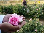 warga-taif-arab-saudi-perlihatkan-bunga-mawar.jpg