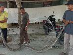 warga-tangkap-ular-piton-di-aceh-utara.jpg