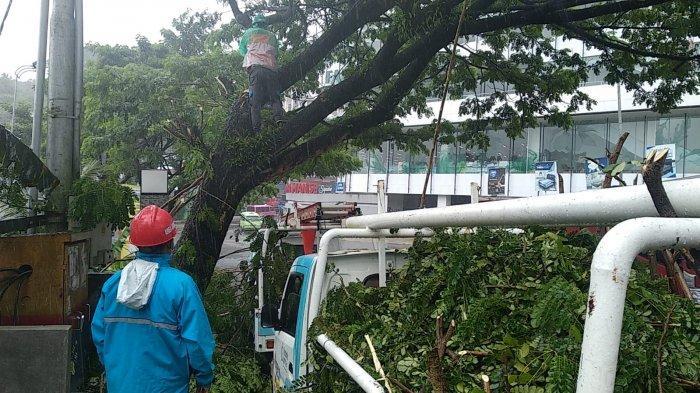 Antisipasi Bahaya Kelistrikan di Musim Hujan, PLN Tebang Ranting Pohon di Jalan Jend Sudirman Ambon