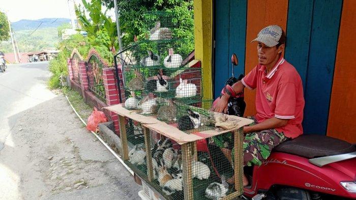 Seorang Supir Angkot di Ambon Cari Pemasukan Tambahan dengan Bisnis Jual Peliharaan Kelinci