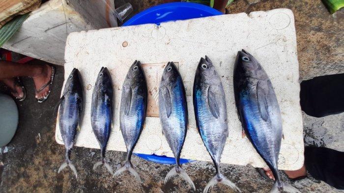 AMBON: Jenis ikan di Pasar Mardika, Selasa (2/3/2021).