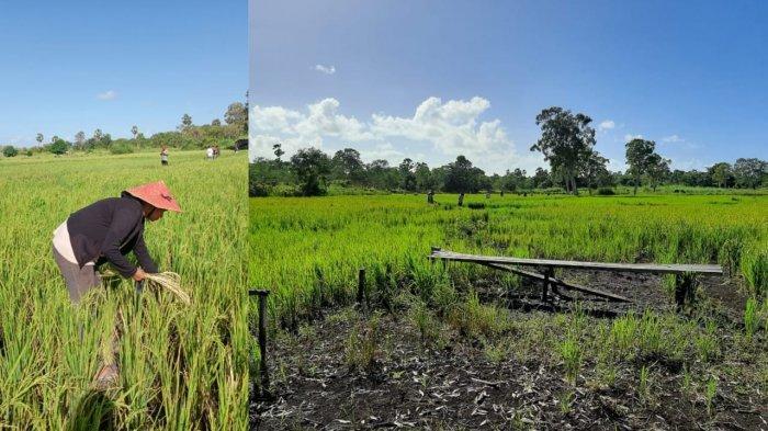 Kepulauan Tanimbar Jadi Kabupaten Termiskin di Maluku