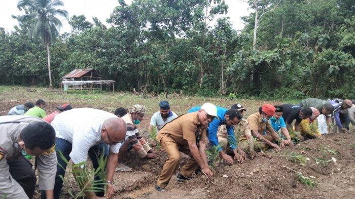Jaga Ketahanan Pangan di Masa Pandemi Covid-19, KNPI Malteng Luncurkan Kebun Percontohan Pemuda Tani
