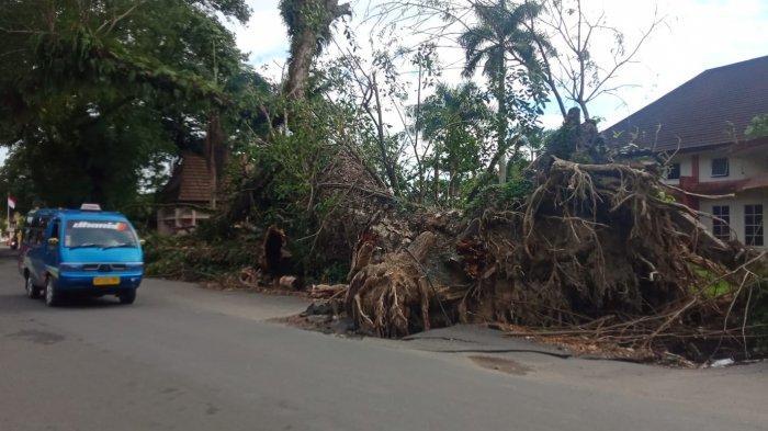 MALUKU: Pohon Tumbang di Jalan Sultan Hasanudin yang belum dibersihkan sepenuhnya, Rabu, 27/07/2021