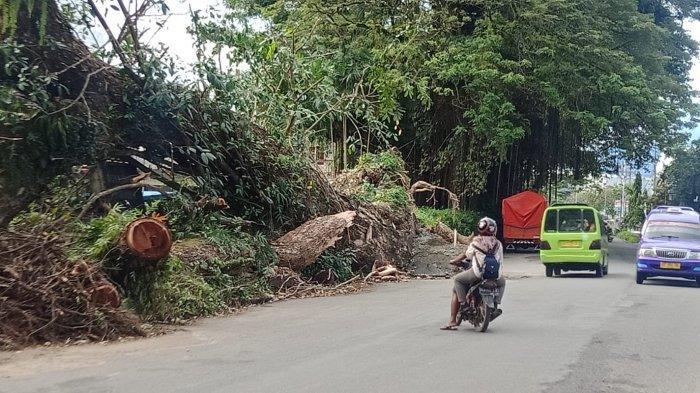 Tekan Bahaya di Musim Penghujan, Damkar Kota Ambon Pangkas Puluhan Pohon