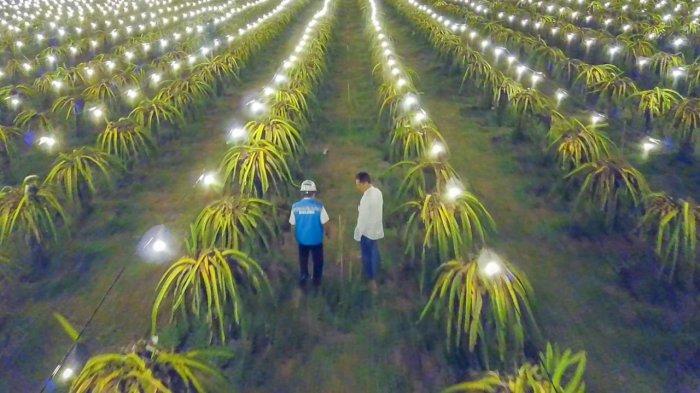 Electrifying Agriculture, Pertanian Modern di Era Digital
