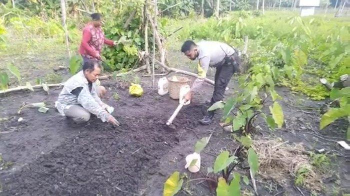 Bhabinkamtibmas Polsek Wertamrian, Aipda Johny Manullang saat mendampingi warga bercocok tanam di Desa Amdasa, Kecamatan Wertamrian, Kabupaten Kepulauan Tanimbar