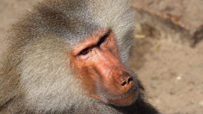 6 Makhluk Paling Mematikan di Dunia yang Mungkin Tak Pernah Kamu Duga, Hati-hati jika Bertemu!