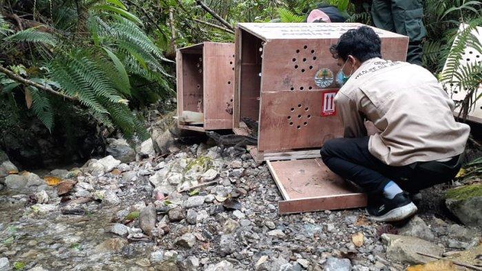 90 Ekor Hewan Endemik Dilepas-liarkan di Taman Nasional Manusela Maluku Tengah
