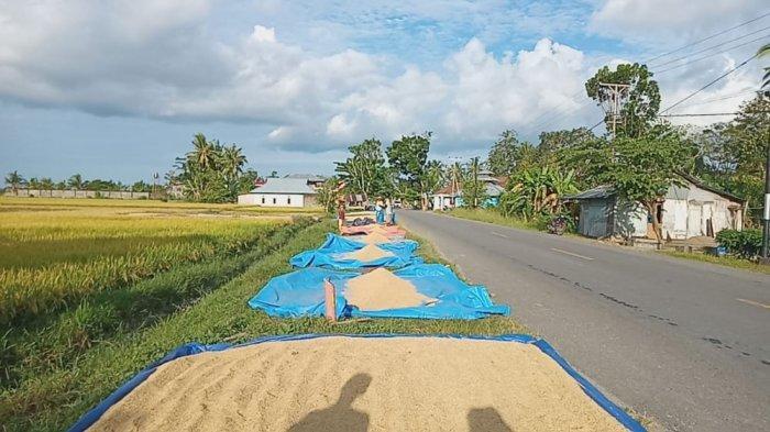 Bulog Tolak Beras Asal Pulau Buru, Dinas Pertanian Akui Telah Surati Pemerintah Provinsi