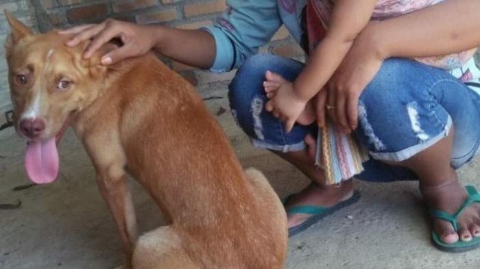 Foto anjing sebelum dianiaya