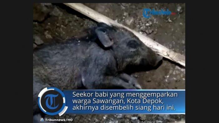 Viral Seorang Ibu Menuduh Tetangganya Pakai Babi Ngepet, Kini Sudah Minta Maaf