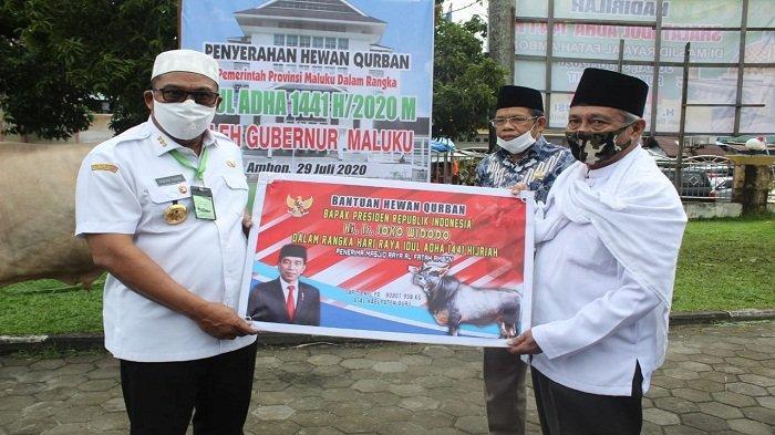 Gubernur Maluku Serahkan Hewan Kurban di Negeri Tulehu, Termasuk Sapi Ongol 900 Kg